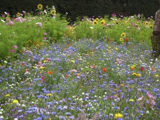 nasiona łąka kwietna raj dla owadów